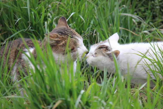 Kissing cats