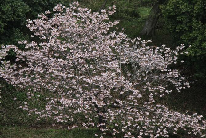 市川市霊園の花