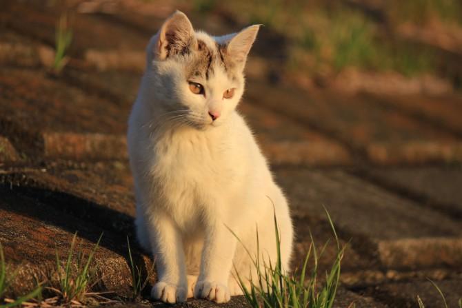夕陽を見つめる子猫