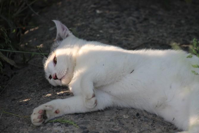 猫お昼寝中