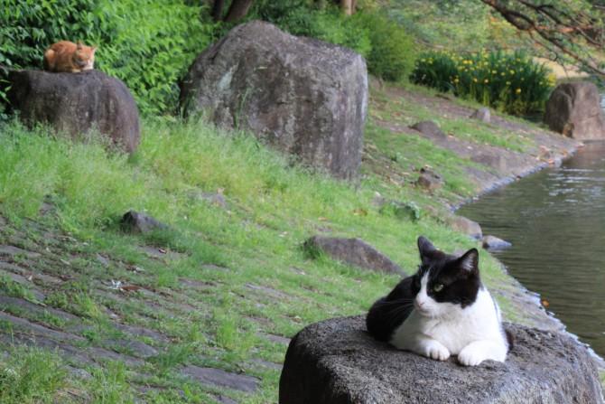 岩の上が落ち着きます