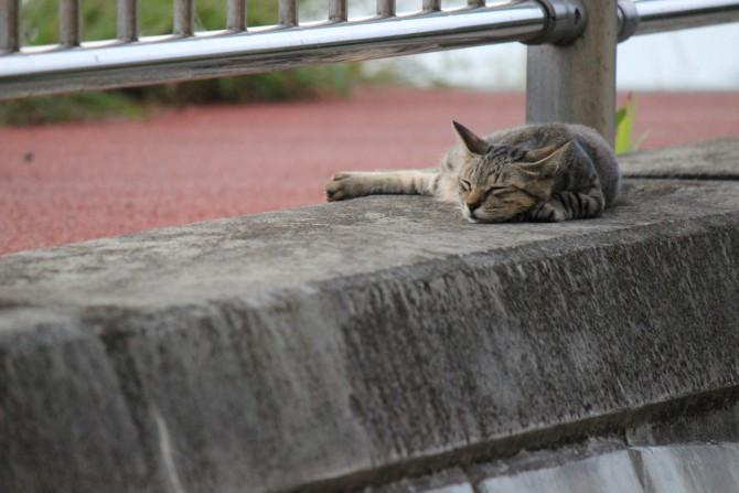 猫も暑くて大変!?