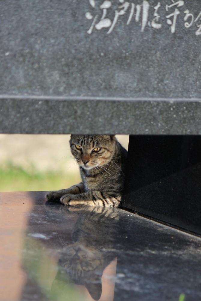 記念碑の影からチラッと猫