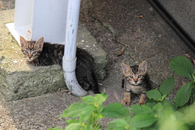 子猫の兄弟?