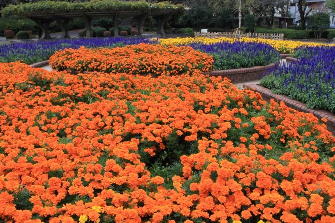 里見公園の花壇