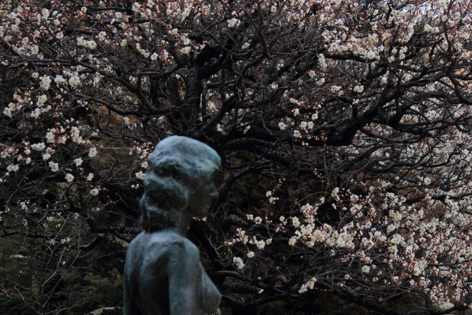 芳澤ガーデンギャラリーの梅
