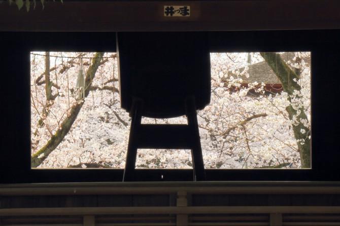 太鼓と桜 中山法華経寺にて