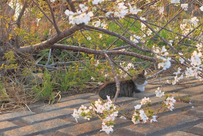 山桜の下で
