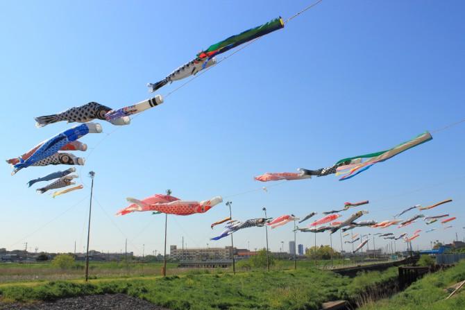 第23回鯉のぼりフェスティバル 2013年 国分川調整池付近にて