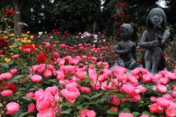 須和田公園でも春バラが見頃です
