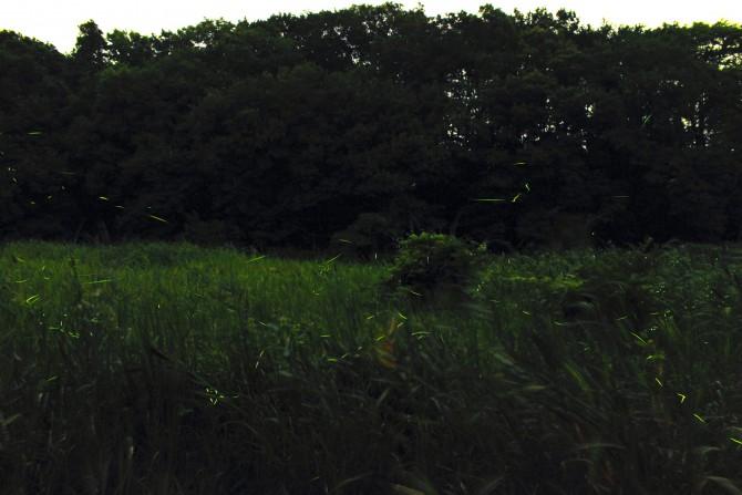 大町自然観察園 ホタル観賞会 2013年
