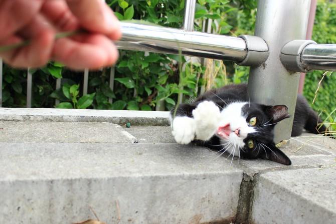 猫が釣れました