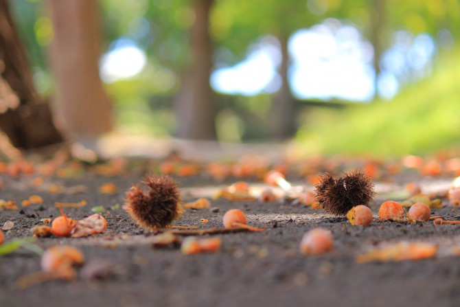 秋の落とし物 市川市霊園にて