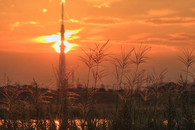 夕陽とススキ