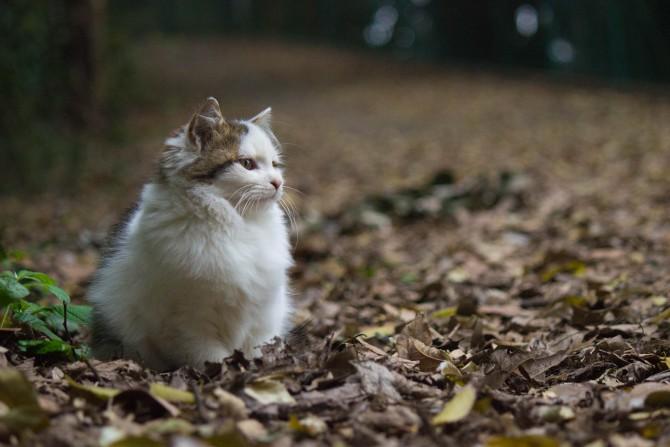 落ち葉のじゅうたんの上で
