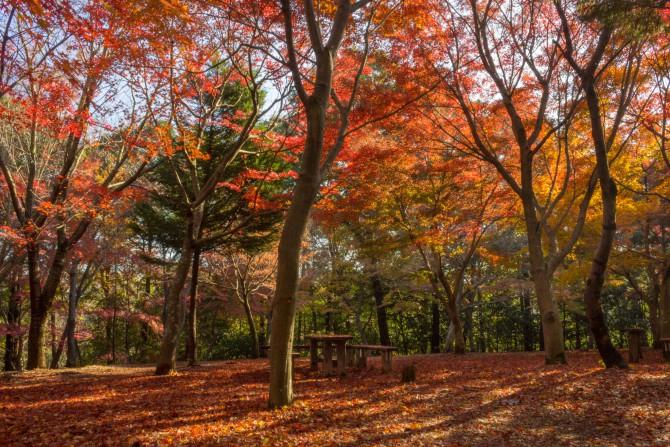 大町自然観察園のもみじ山の紅葉