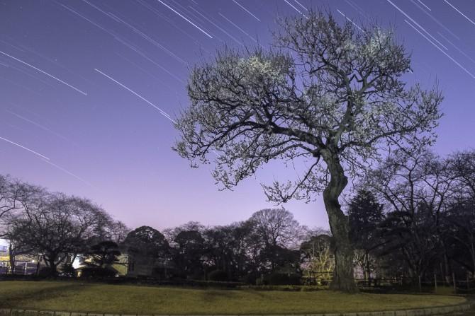 梅と星 里見公園にて