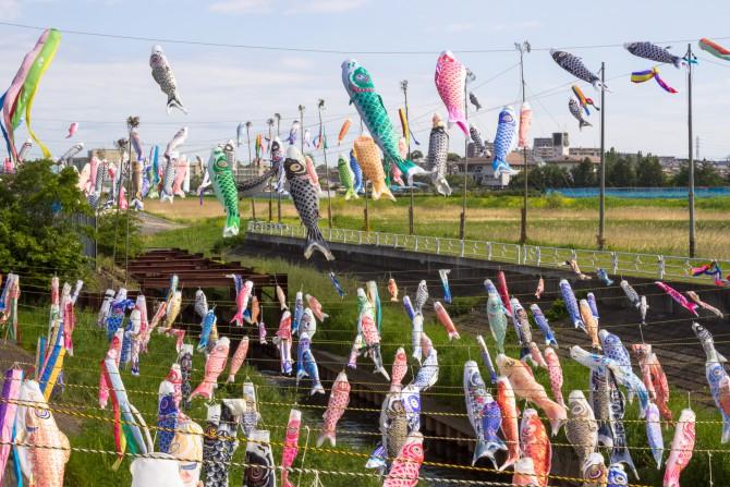 鯉のぼりフェスティバル 2014年5月4日(火) 国分川調整池にて