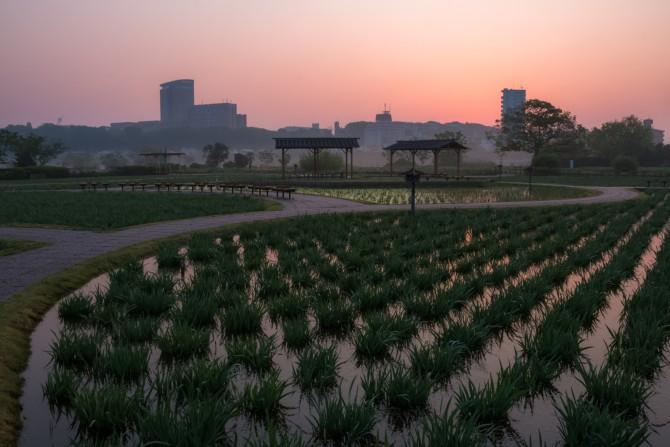 日の出前の江戸川から