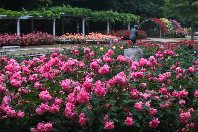 大町自然観察園の春バラ できればお早めに