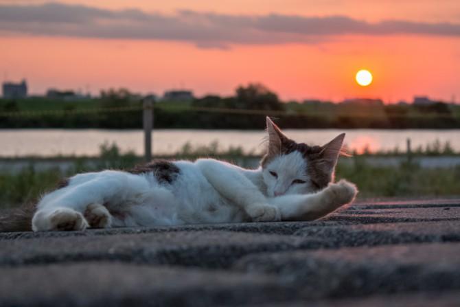 日没前のリラックスタイム