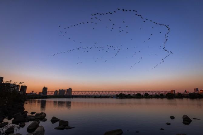 鳥の群れ 江戸川のほとりより