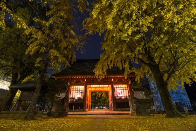 日の出前の葛飾八幡宮