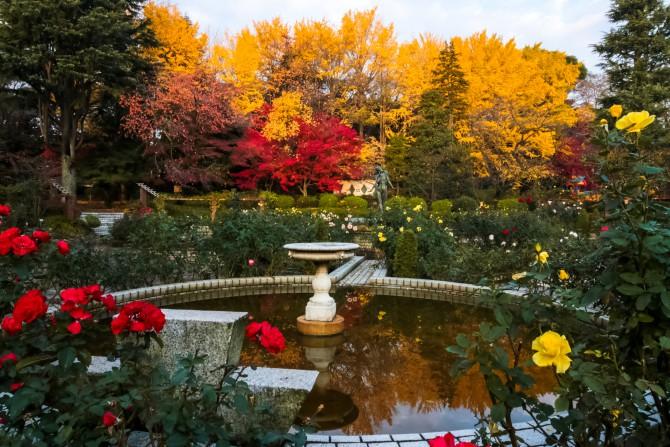 里見公園のバラ園と紅葉