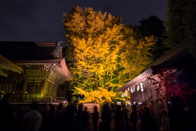 葛飾八幡宮 千本公孫樹のライトアップ