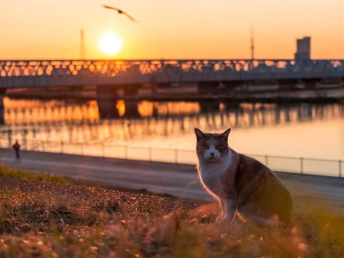 夕陽を背に
