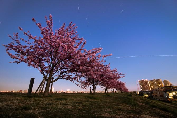 河津桜と国際宇宙ステーション 江戸川(市川南)の河津桜並木にて