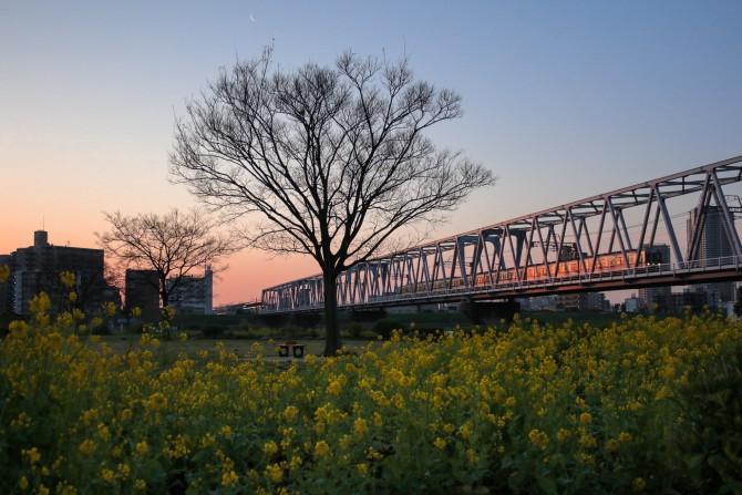 始発電車と菜の花