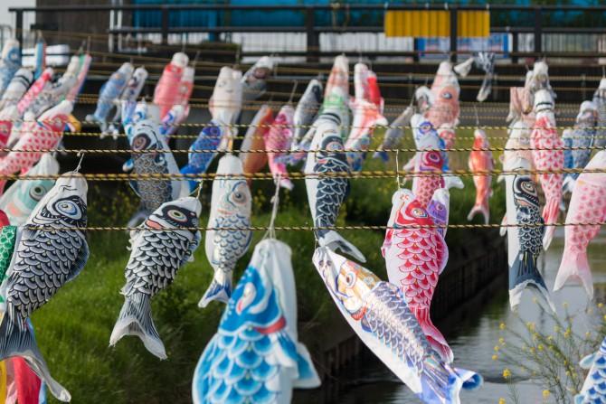 鯉のぼりフェスティバル 2015 国分川調整池付近にて