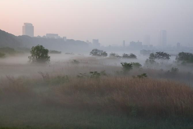 朝もやの溜まる江戸川河川敷