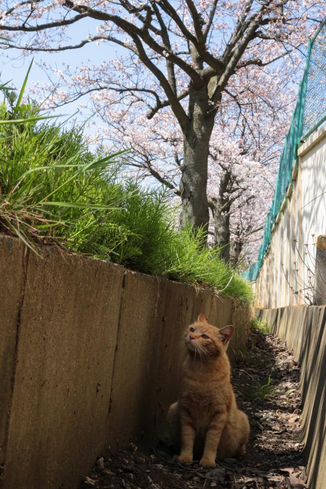 はじめての春