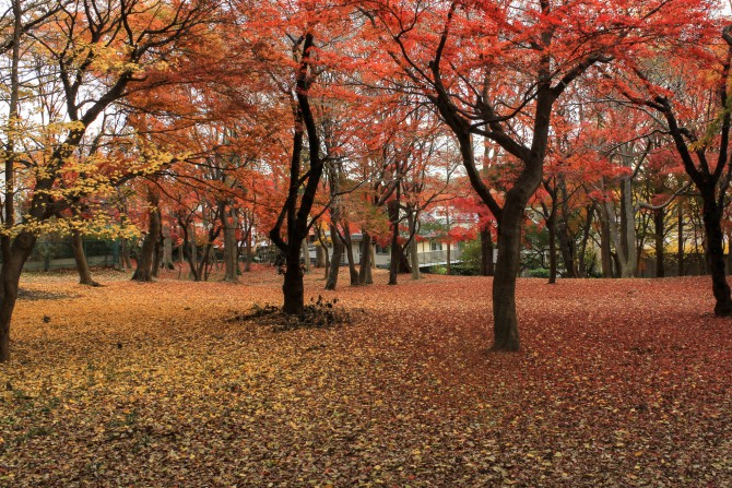 市川の紅葉スポット(5)「里見公園」