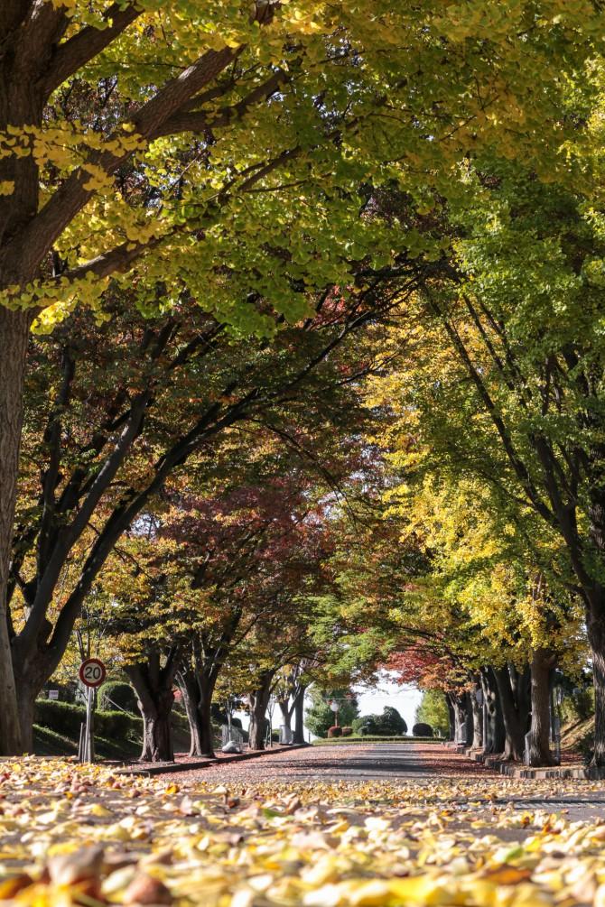 紅葉のはじまり 市川市霊園にて