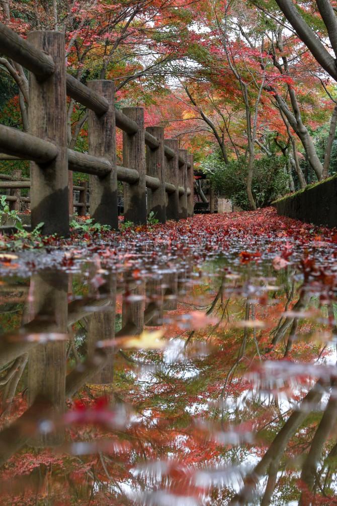 大町自然観察園で「もみじ観賞会」 2015年11月22日(日)~12月6日(日)