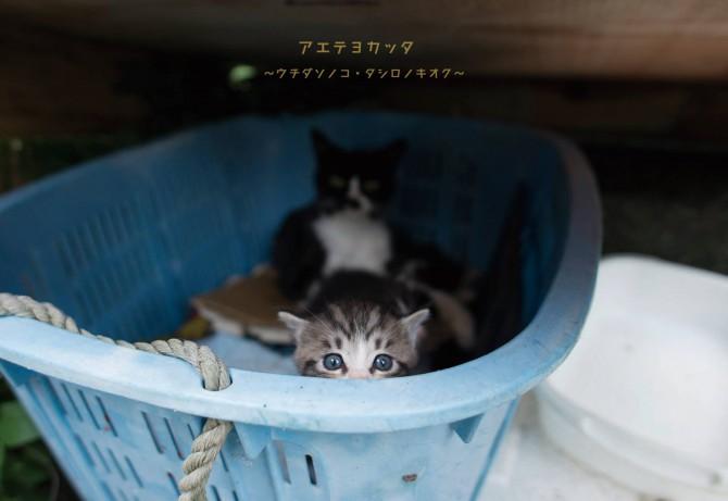 写真家内田園子 写真展「アエテヨカッタ ~タシロノキオク~」