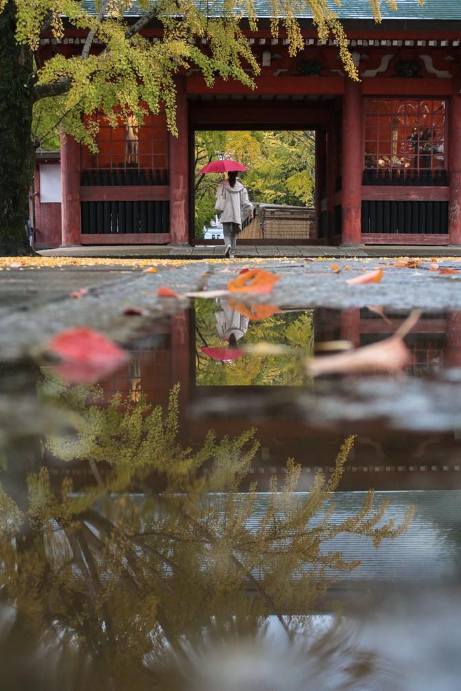 雨の葛飾八幡宮