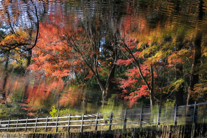 モミジの紅葉が見ごろ 大町自然観察園にて