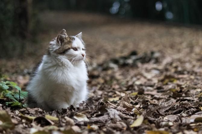 落ち葉の絨毯の上で
