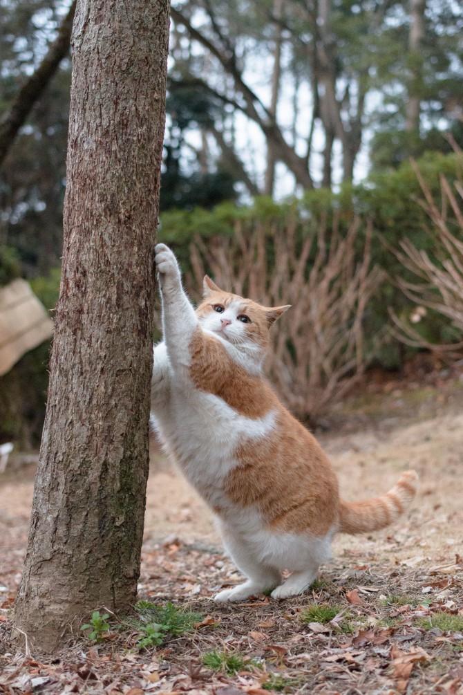 木登りの木の前で