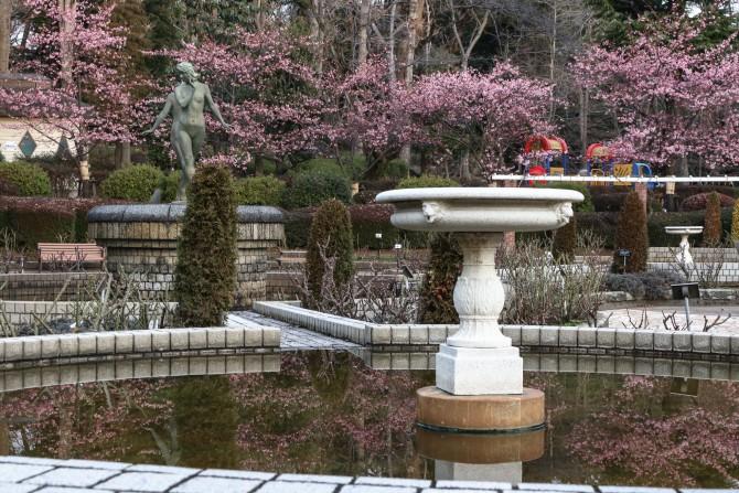 河津桜がそろそろ見ごろに 里見公園にて