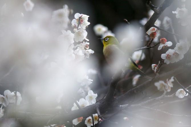 じゅん菜池緑地で「梅まつり」 2016年3月13日(日)