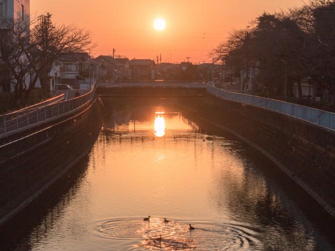 朝の真間川