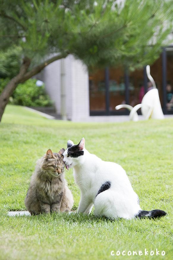 松山庭園美術館「猫ねこ展覧会2016」に参加します
