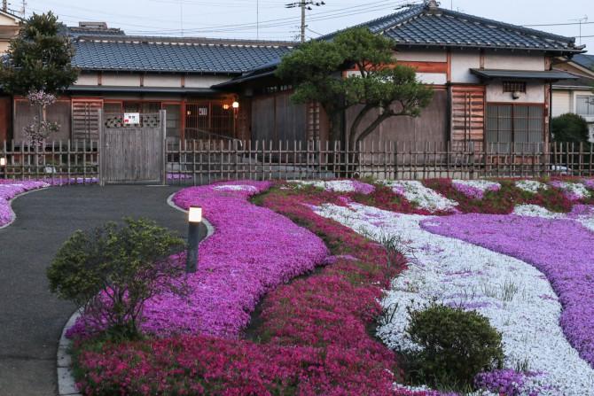 郭沫若記念館の芝桜が見ごろです