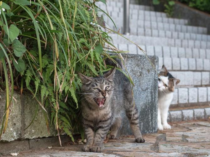 白猫は見た