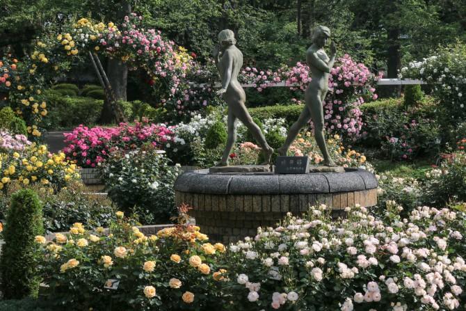 春のバラが見ごろに 里見公園にて